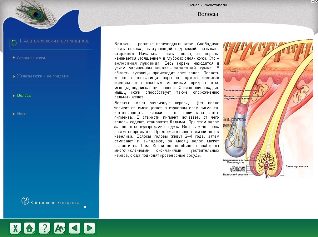 Matching anatomy integumentary system
